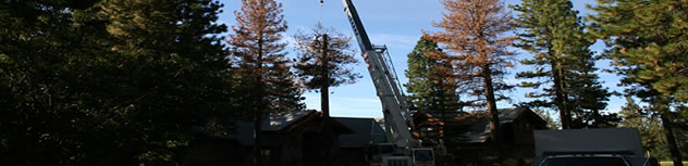 Crane Service from Stay Green Tree