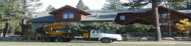 Tree Fertilizing Service Northern Nevada
