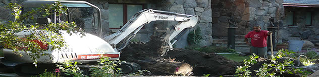 Tree stump removal Northern Nevada
